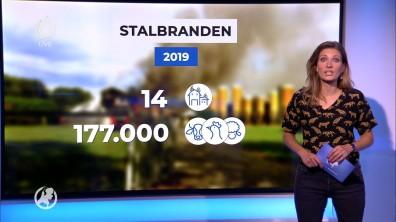 cap_Hart van Nederland - Laat_20190908_2230_00_01_26_10
